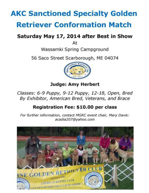 AKC Sanctioned Specialty Golden Retriever Conformation Match